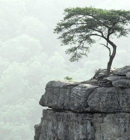 Tree-at-the-precipice