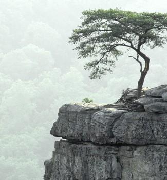 Tree-at-the-precipice